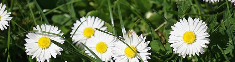 Flores para o Dia dos Finados [23, 24, 25 Outubro 2017]